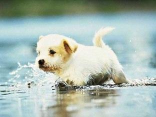 Cute Puppy Quiz by mcpake family