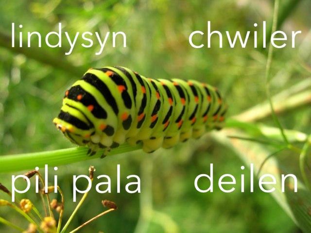 Cylch Bywyd Lindysyn by Nia Tough