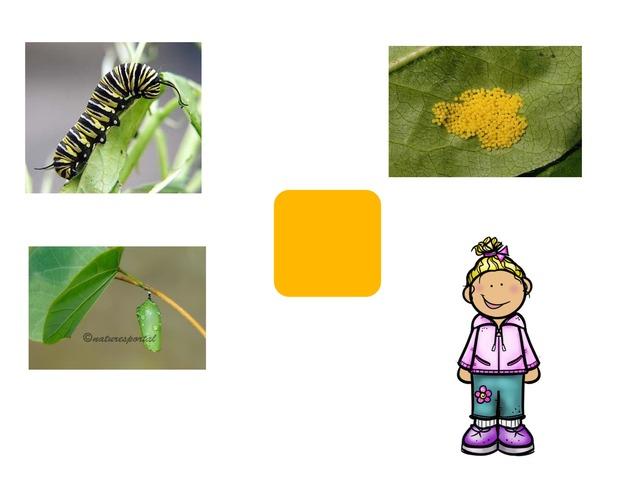 دورة حياة الفراشة  by Ebtisam Ali
