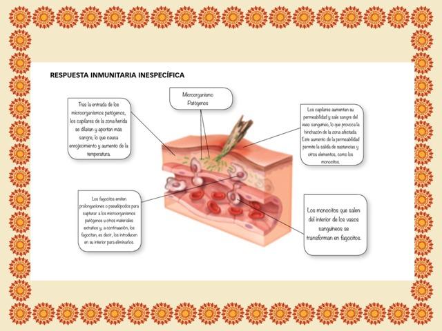 Sistema Inmunitario by Natalia San Marcos Carretero
