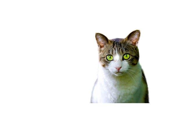 The Cat by Rachel Scipio