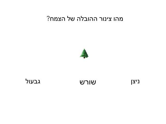 אברי הצמח by Alon Karni