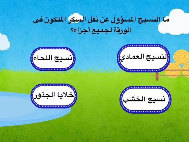 غلق أجزاء النبات by asmaa hassan