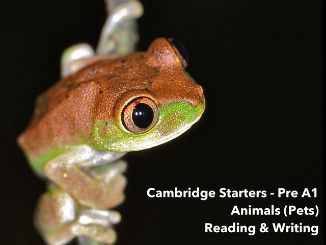 """Animals Pets - """"This is a (noun)"""" Reading & Writing  - Cambridge Starters Pre A1 ESL EFL EAL by Teeny Tiny TEFL"""