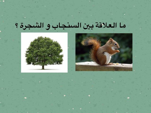 ماهو النظام البيئي by Sarah Ahmad