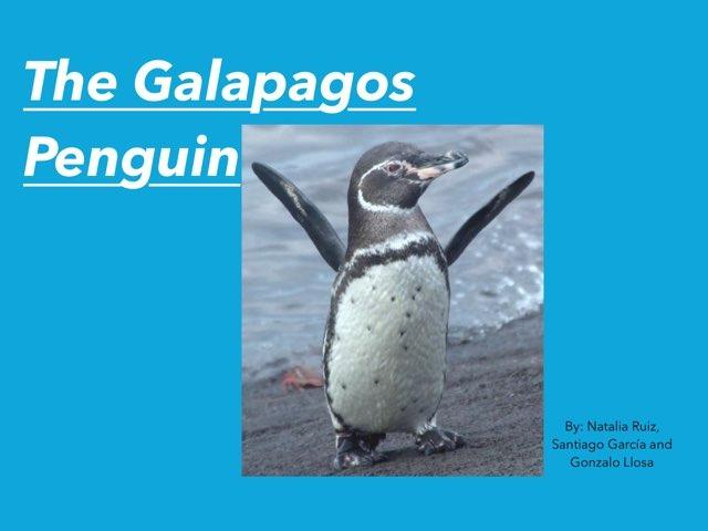 Galapagos Penguin by Natalia Ruiz