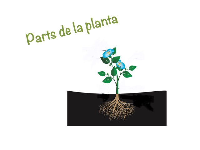 Parts De La Planta by Lorena Iglesias