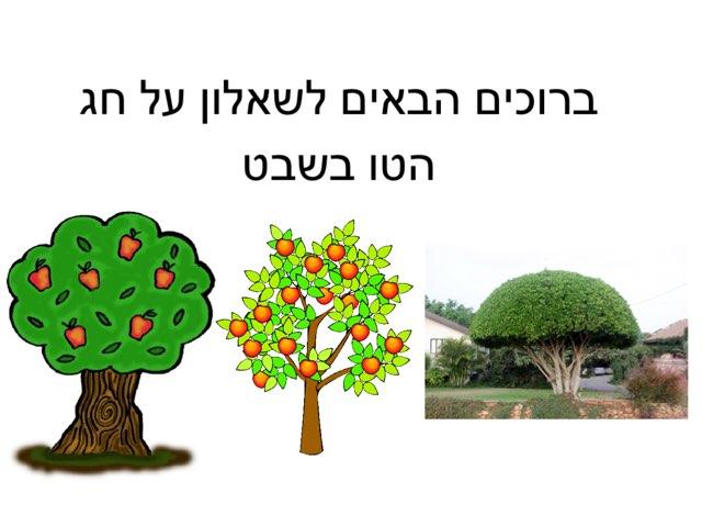 טו בשבט חג האילנות לירון אביב by gali bs