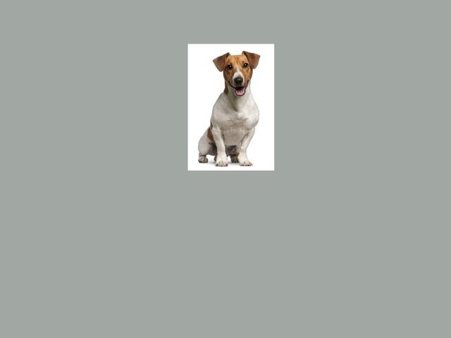 מנייה של כלבים by עמית בן חמו