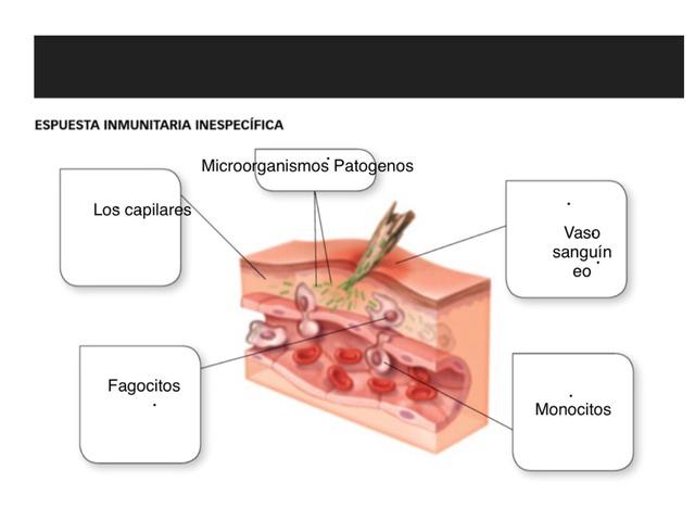Puzzle Biología  by Pablo Fernandez Lopez