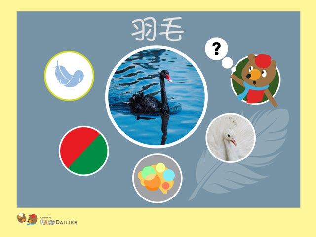 一起來學習關於羽毛的知識吧! by Kids Dailies