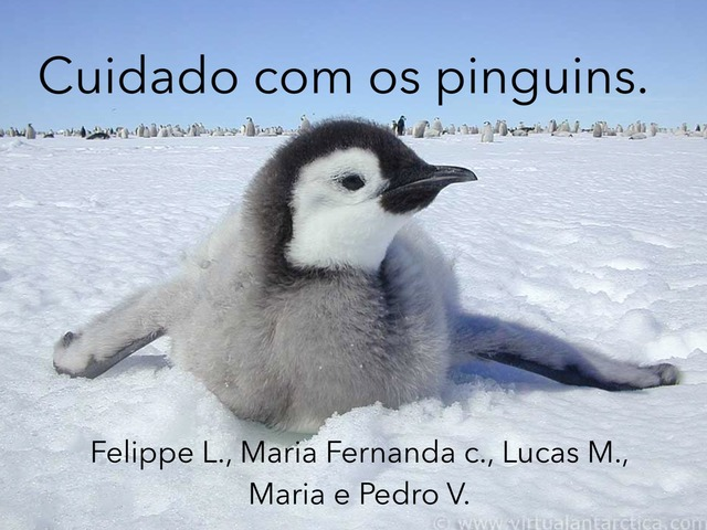 Cuidado Com Os Pinguins  by l