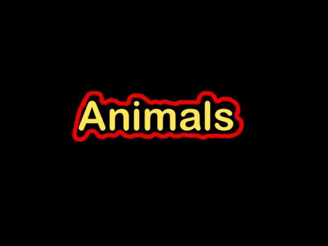 CVI Animals by Eunice Ramirez