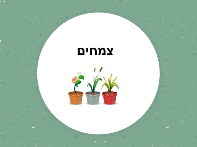 צמחי תבלין ומרפא by Avigail Provisor