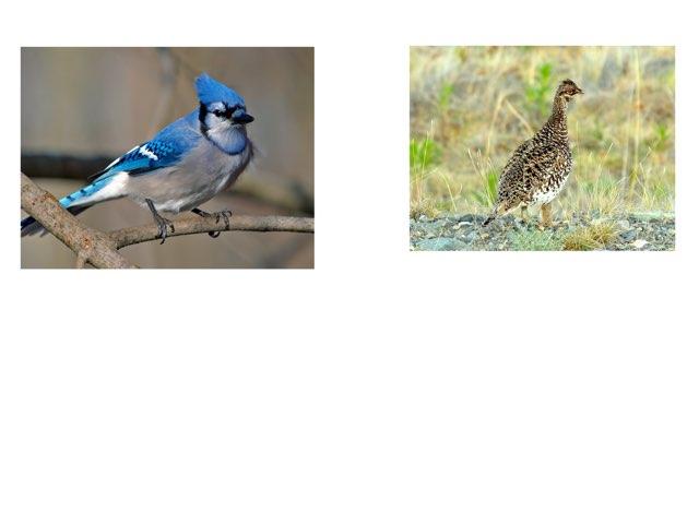 Beautiful Birds  by 3NM iPad