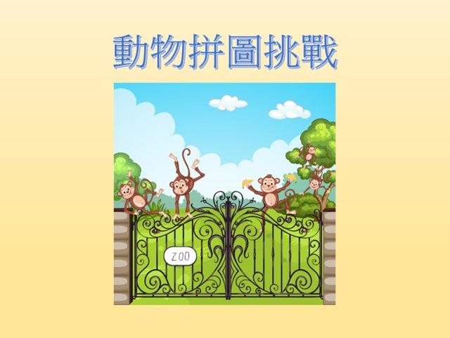 動物拼圖挑戰 by Peter Cheung