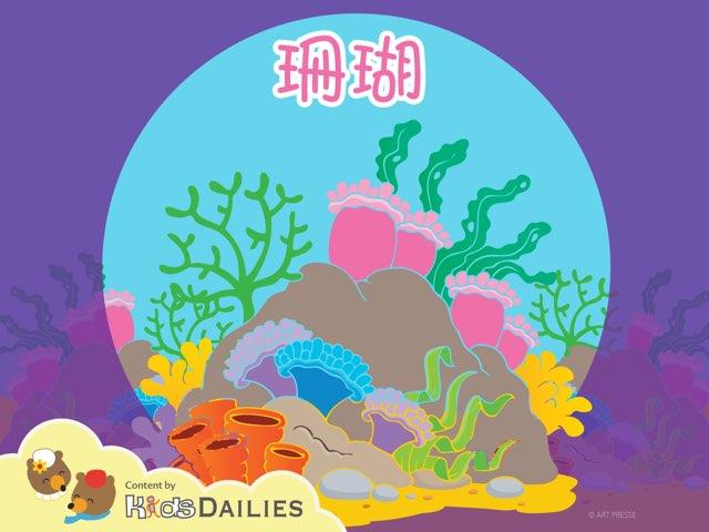一起来学习关于珊瑚的知识吧! by Kids Dailies