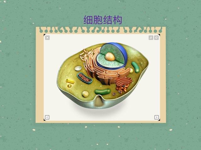 游戏 2细胞结构 by Doris Ye