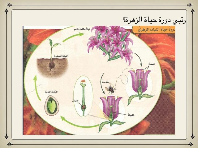 دورة حياة الزهرة by ام علي الأمير