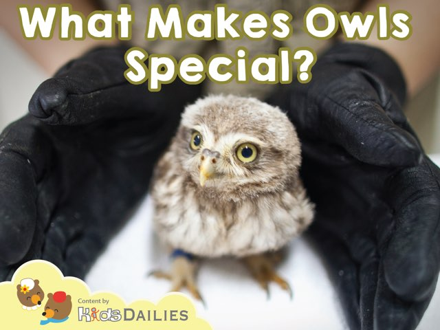 What Makes Owls Special? by Kids Dailies