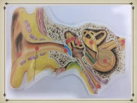 חלקי האוזן by אליענה הרפז