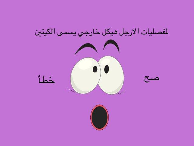 مفصليات الارجل  by Shaimaa Mohammed