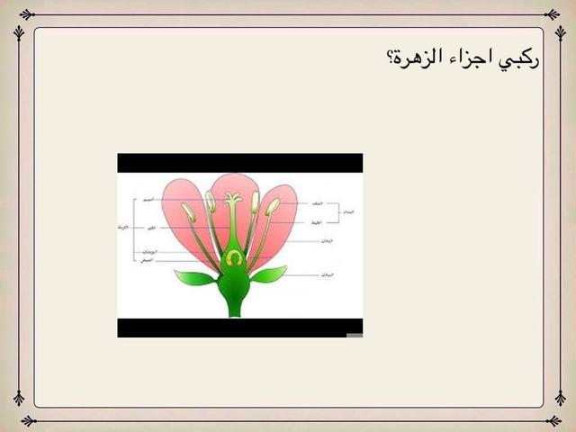 اجزاء الزهرة by ام علي الأمير