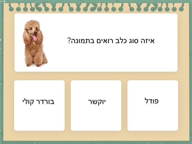 סוגי כלבים הכינה אביב בית ספר קישון by בית ספר קישון