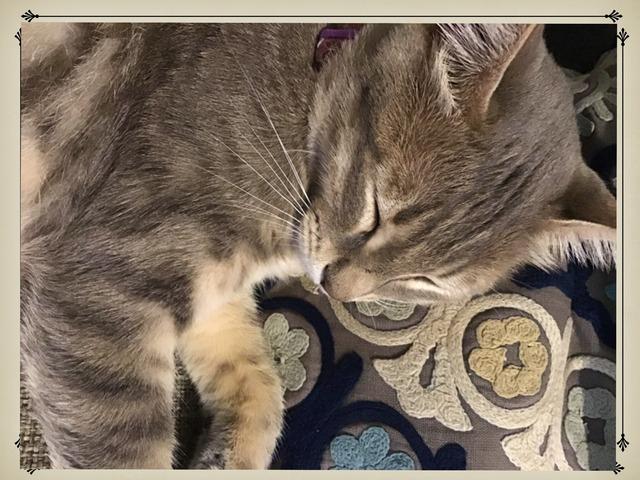 חתולים by מאיה פנחס