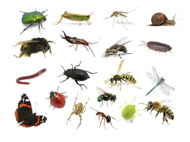 Kriebelbeestjes  by Di schim