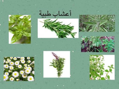 أعشاب طبيعية وعطرية by אמל עבאס
