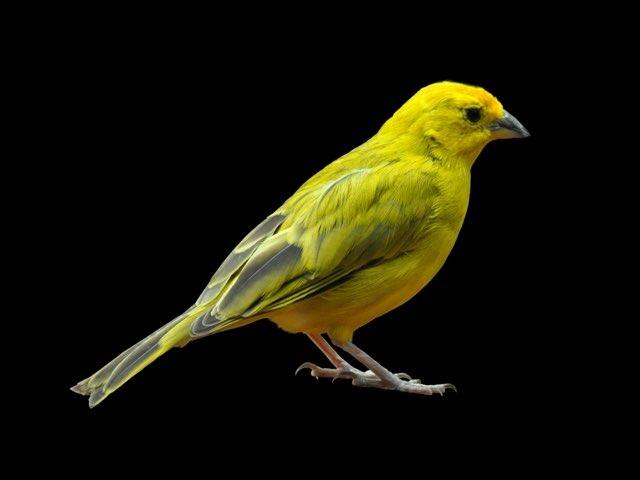 birds by S Fleming
