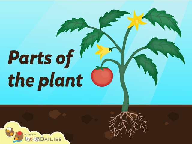 Parts Of The Plant by Kids Dailies