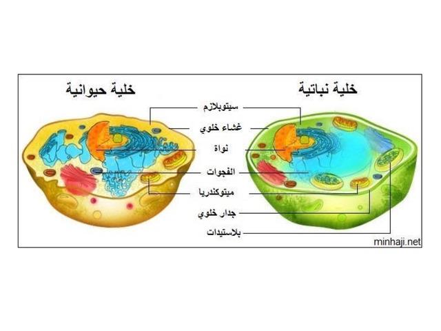 قارني بين الخلية النباتية والحيوانية by Saad Awwad Saad1427