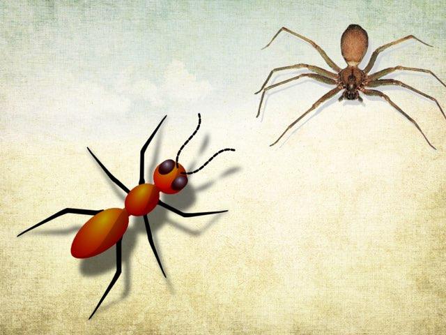الحشرات و المفصليات  by hanan alhashemi