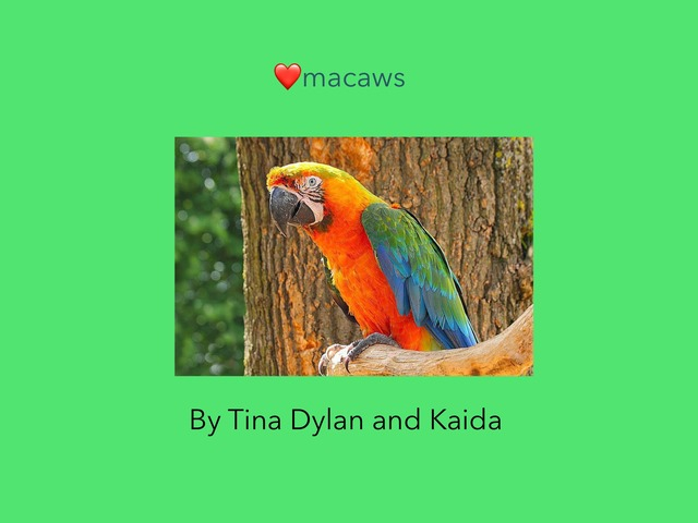 Macaws by Tracey Stewart