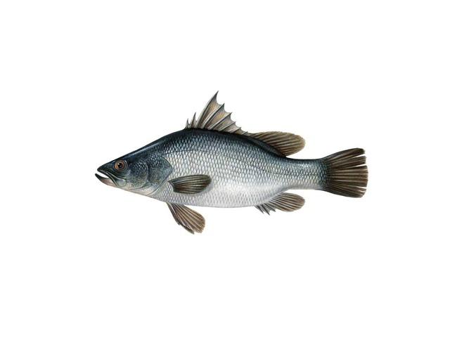 דג by המרכז הטכנולוגי בית איזי שפירא