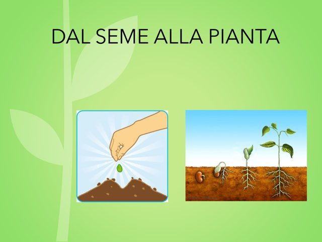 Dal Seme Alla Pianta by Margherita Bilello