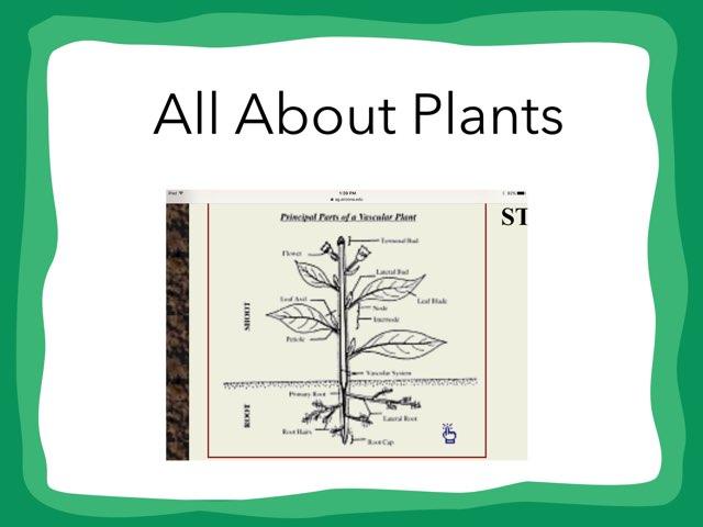 Dane Plants by Hulstrom 1st Grade