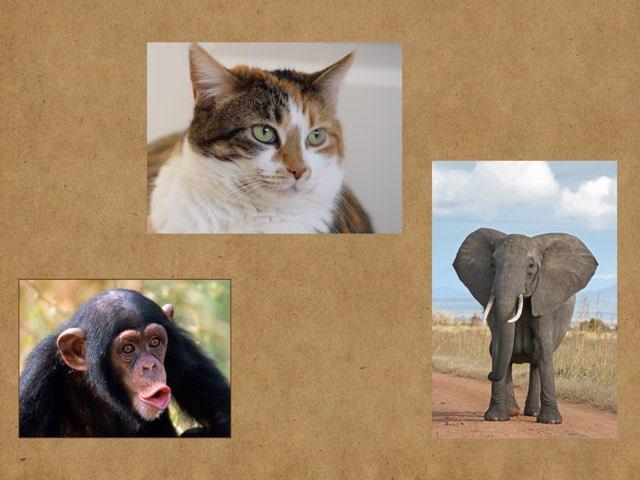 Dear Zoo by Kristi newman