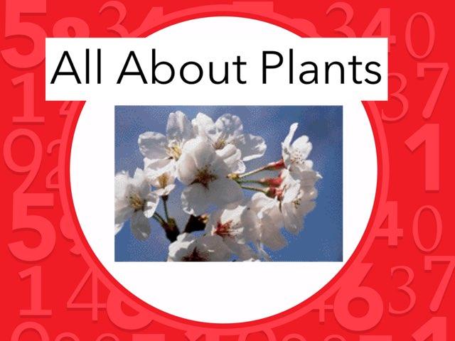 Derek Plants by Hulstrom 1st Grade