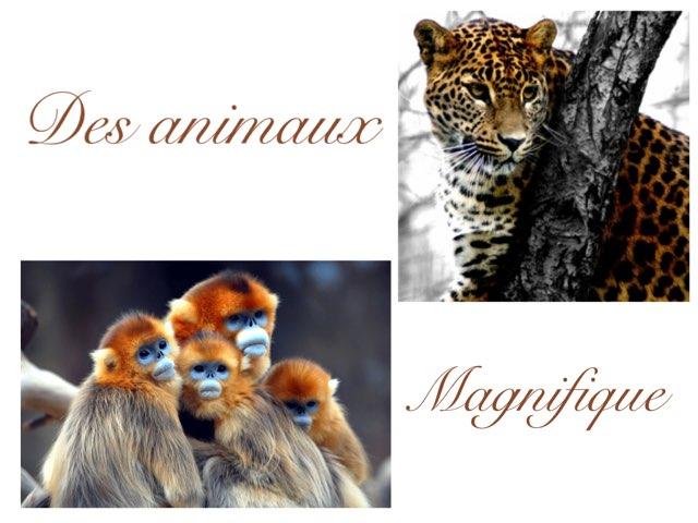 Des Animaux Magnifique  by Charlotte Challet