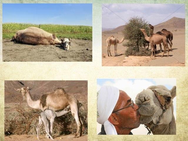 Desert Animals ESL by Jessica Rooney