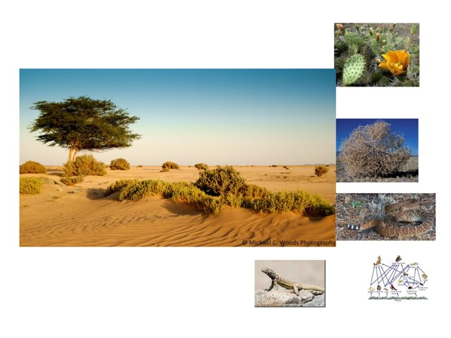 Desert By ZG by Sarah Bosch