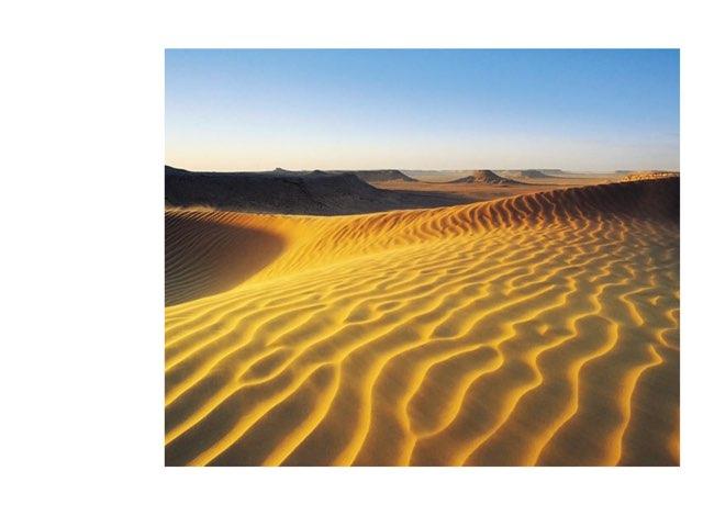 Desert H.H. by Sarah Bosch