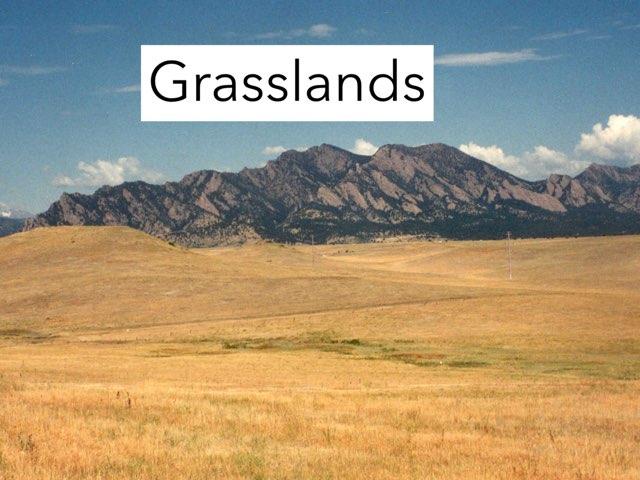 Dh Grassland Savannah by Sarah Bosch