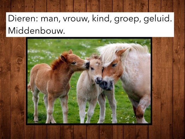 Dieren: Man,vrouw, kind, groep, geluid, middenbouw by Wieke Jasper