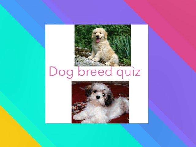 Dog Breed Quiz by Christos ALEXANDRA