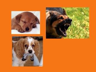 Dog Puzzle by Way tro