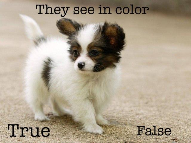 Dog Quiz by Makenzie Mathews